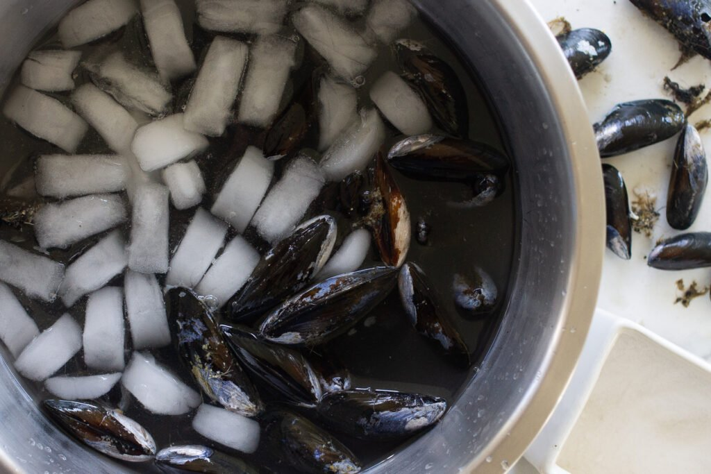How to clean mussels.