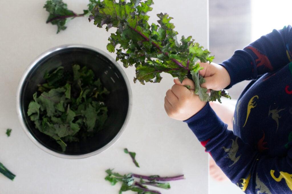 Child pulling leaves off kale.